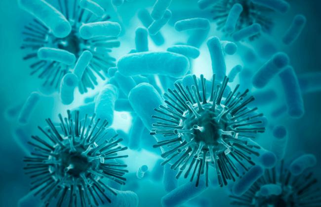 Bakterien und Viren - der kleine, feine Unterschied
