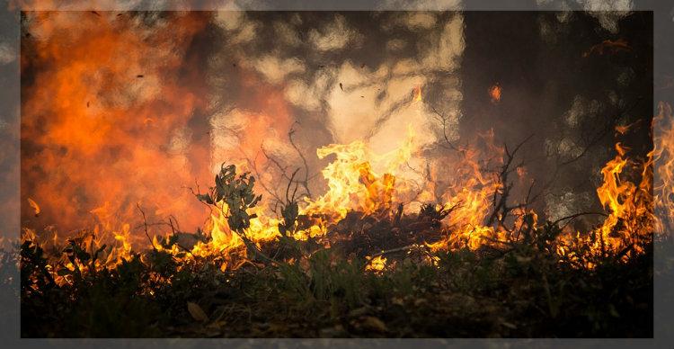 Brandrodung Regenwald CO2