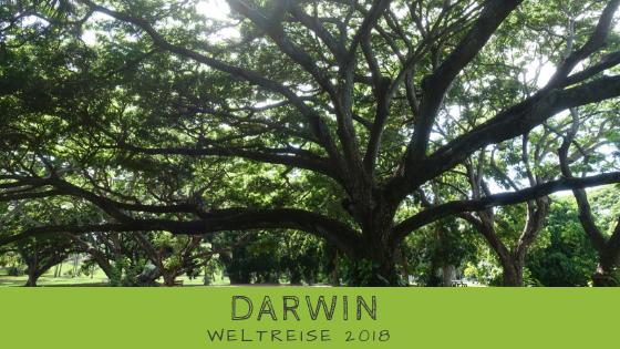 Darwin auf eigene Faust - Erfahrungen