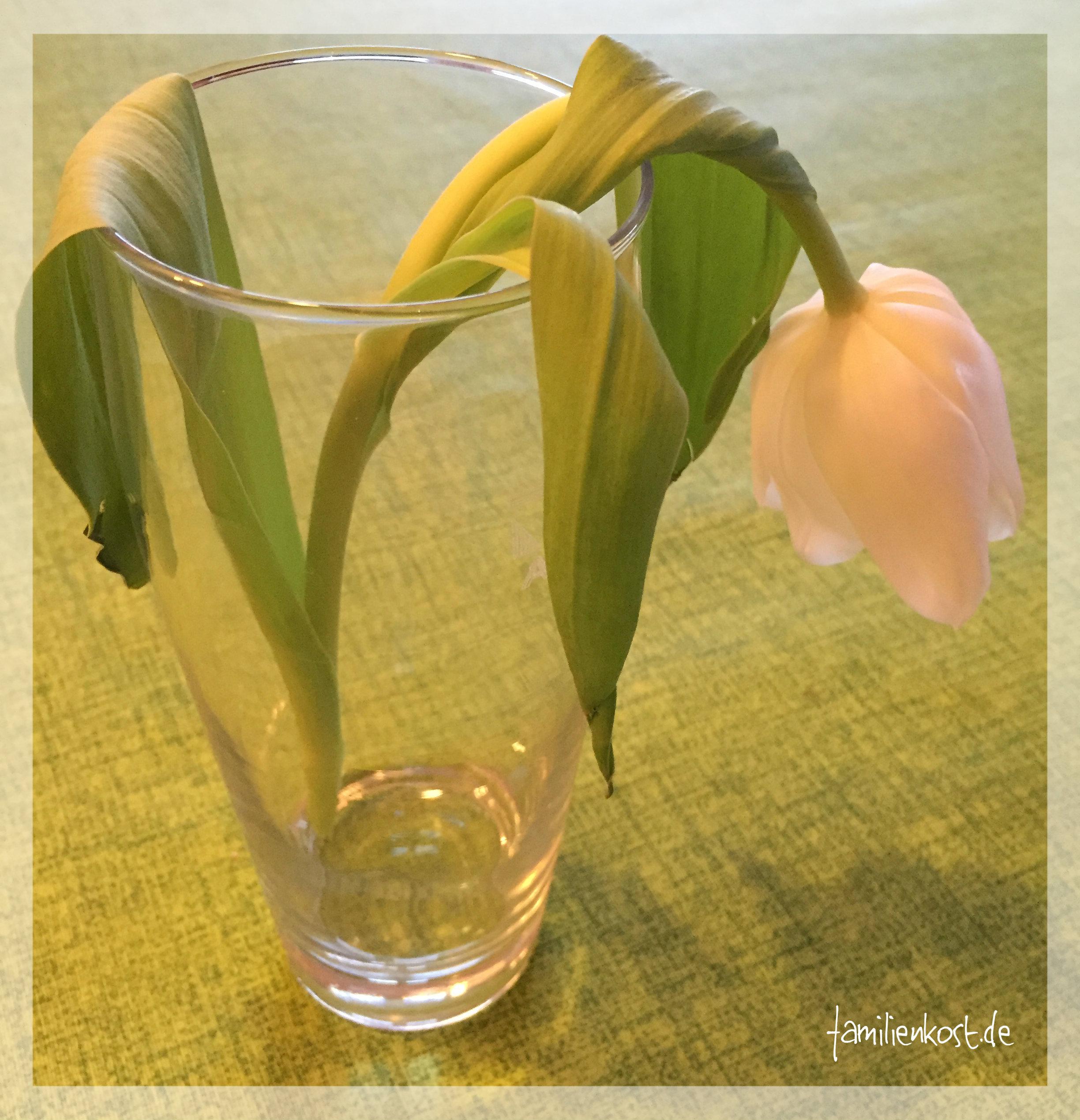 Blumen mit Lebensmittelfarbe selber färben: Experiment